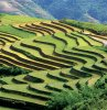Stairy Ricefield